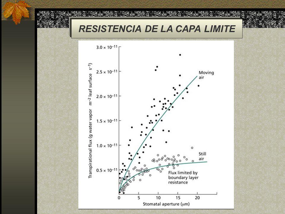 RESISTENCIA DE LA CAPA LIMITE