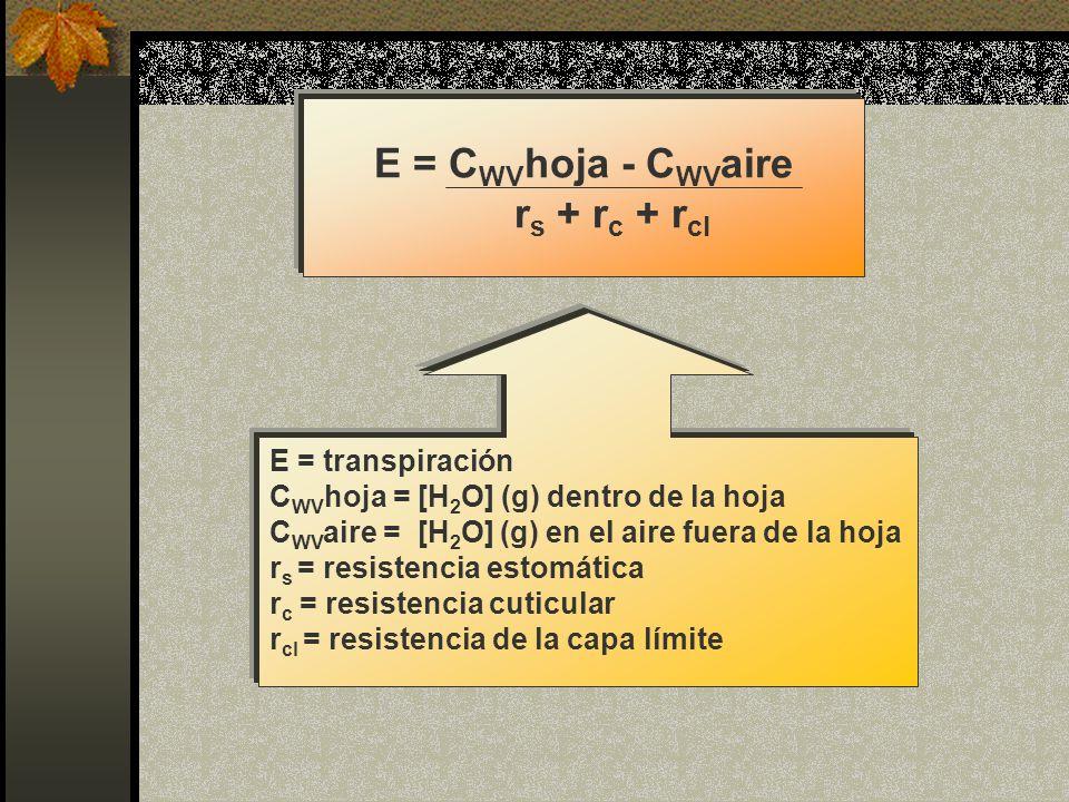 E = C WV hoja - C WV aire r s + r c + r cl E = transpiración C WV hoja = [H 2 O] (g) dentro de la hoja C WV aire = [H 2 O] (g) en el aire fuera de la