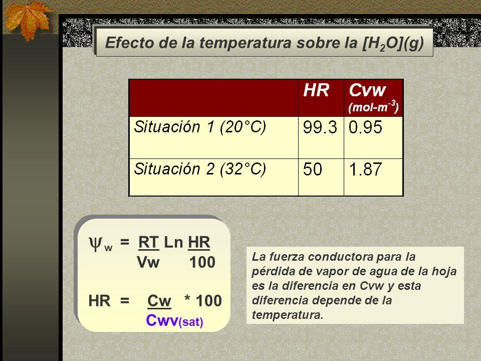 Efecto de la temperatura sobre la [H 2 O](g) La fuerza conductora para la pérdida de vapor de agua de la hoja es la diferencia en Cvw y esta diferenci