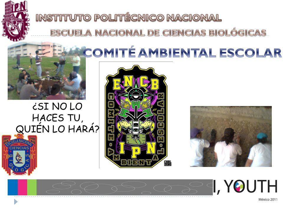 MANEJO DE RESIDUOS ELECTRÓNICOS EN LA UNIDAD PROFESIONAL ADOLFO LÓPEZ MATEOS, ZACATENCO MANEJO DE RESIDUOS ELECTRÓNICOS EN LA UNIDAD PROFESIONAL ADOLFO LÓPEZ MATEOS, ZACATENCO PRESENTA: