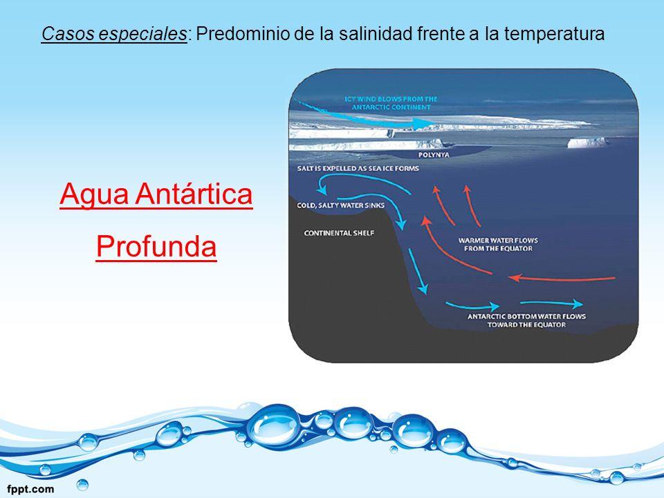Casos especiales: Predominio de la salinidad frente a la temperatura Agua Antártica Profunda