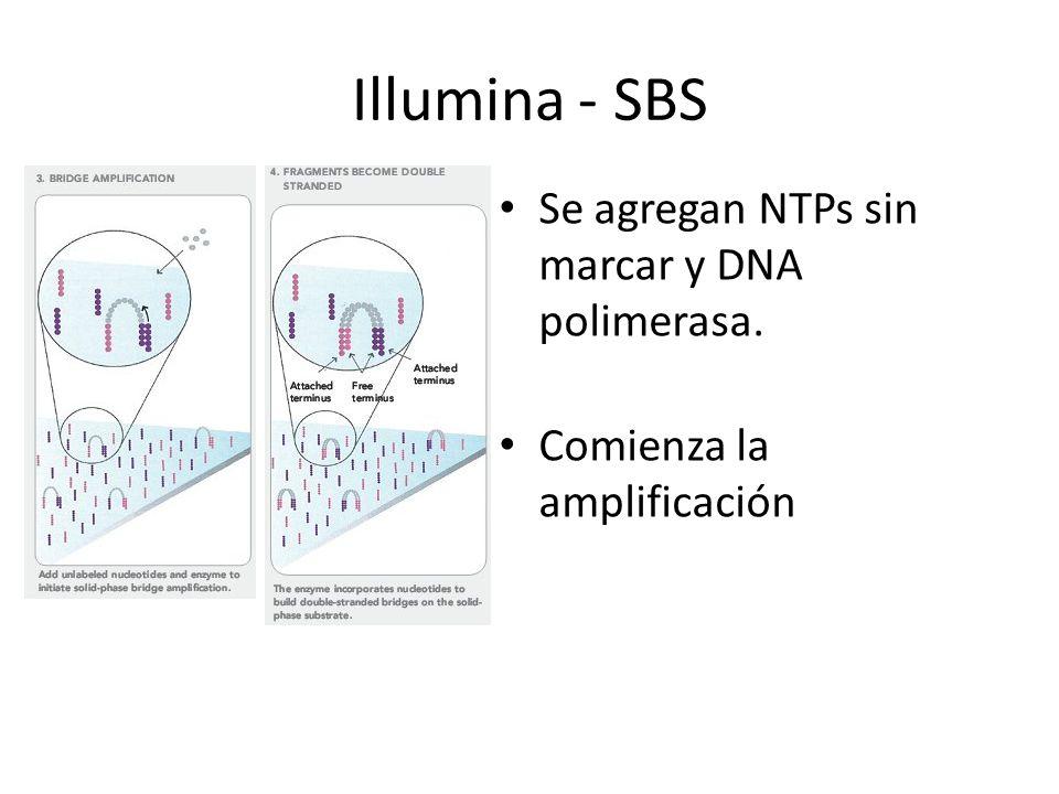 Se agregan NTPs sin marcar y DNA polimerasa. Comienza la amplificación Illumina - SBS