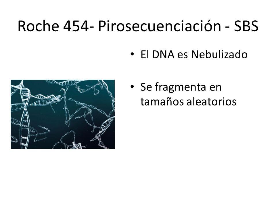 El DNA es Nebulizado Se fragmenta en tamaños aleatorios Roche 454- Pirosecuenciación - SBS