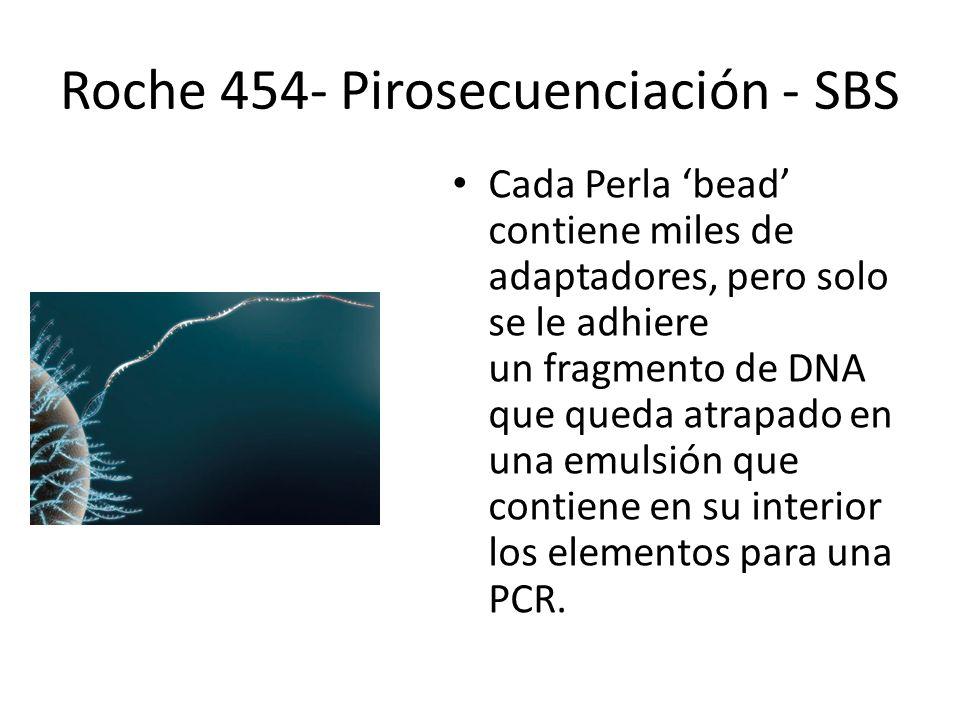 Cada Perla bead contiene miles de adaptadores, pero solo se le adhiere un fragmento de DNA que queda atrapado en una emulsión que contiene en su inter