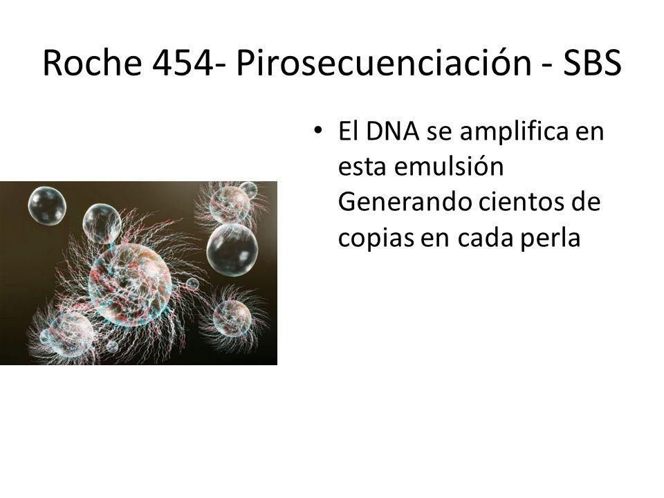 El DNA se amplifica en esta emulsión Generando cientos de copias en cada perla Roche 454- Pirosecuenciación - SBS