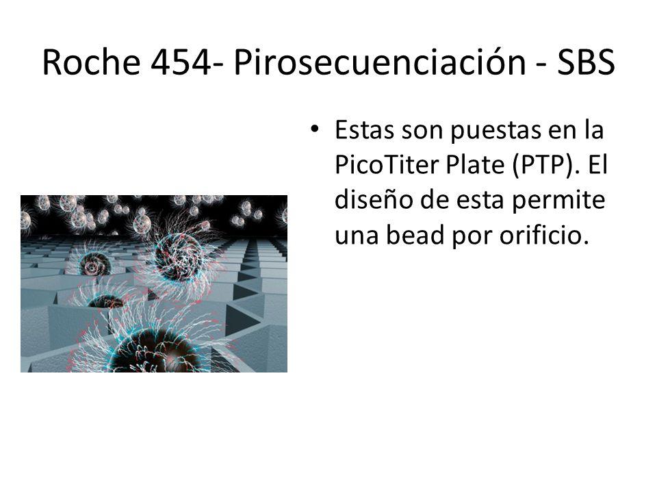 Estas son puestas en la PicoTiter Plate (PTP). El diseño de esta permite una bead por orificio. Roche 454- Pirosecuenciación - SBS