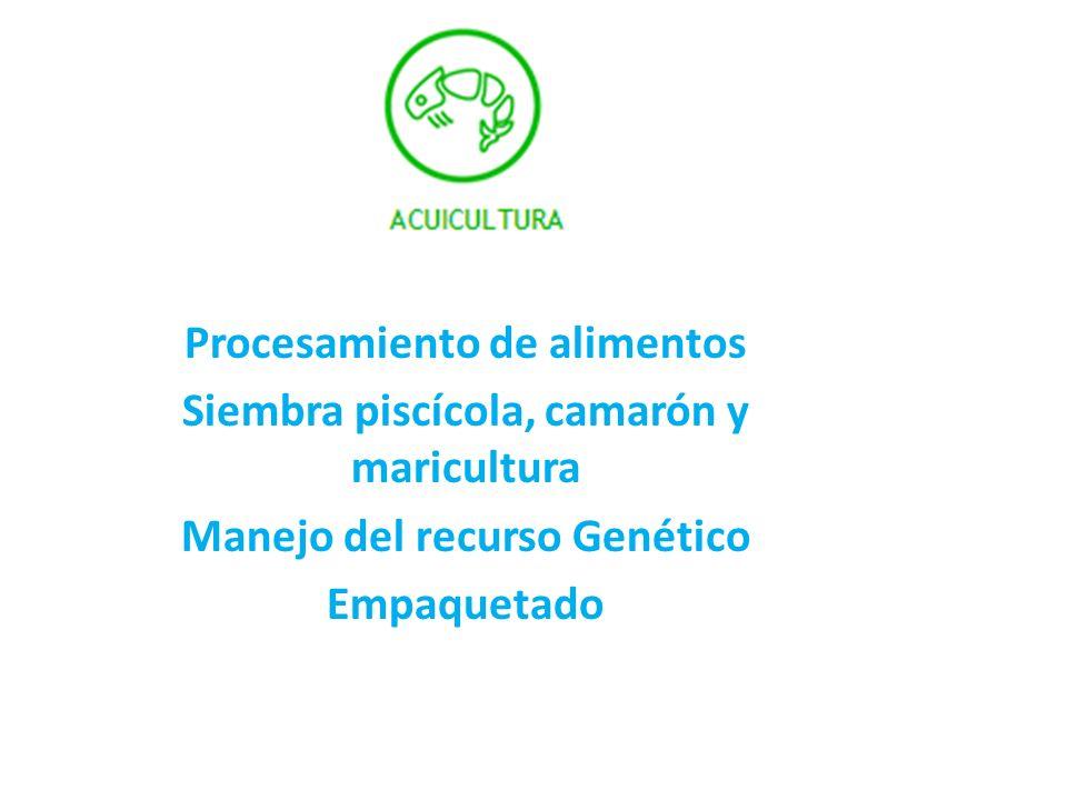 Procesamiento de alimentos Siembra piscícola, camarón y maricultura Manejo del recurso Genético Empaquetado