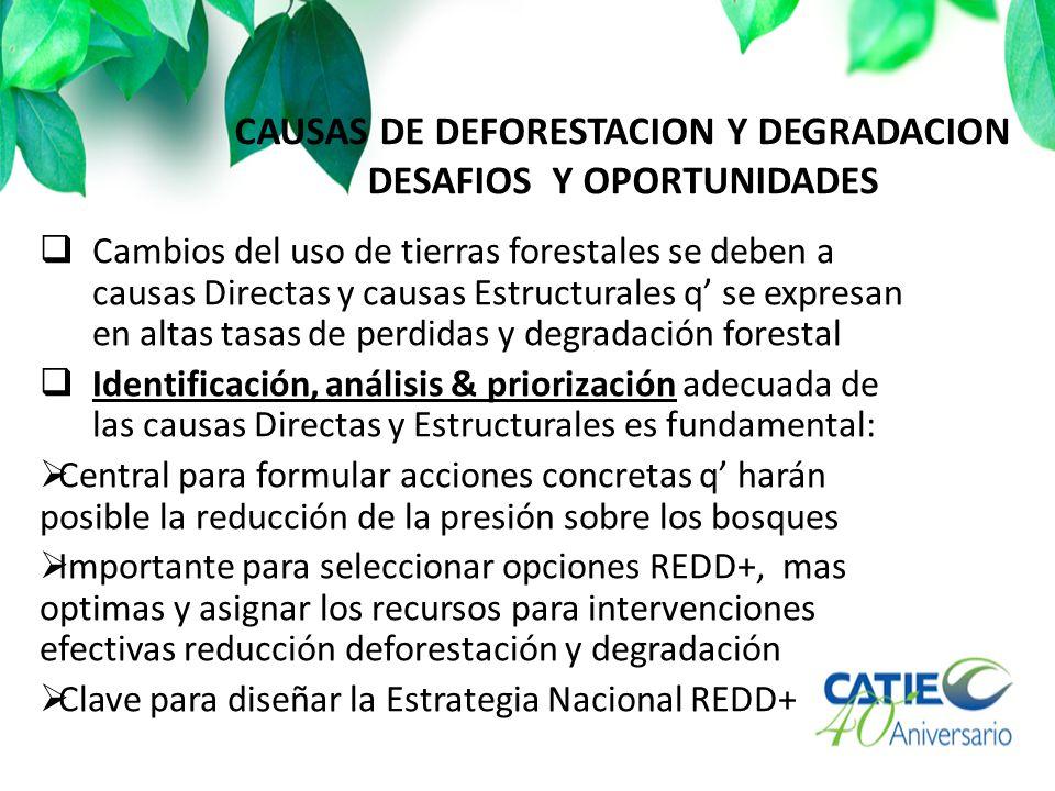 CAUSAS DE DEFORESTACION Y DEGRADACION DESAFIOS Y OPORTUNIDADES Cambios del uso de tierras forestales se deben a causas Directas y causas Estructurales q se expresan en altas tasas de perdidas y degradación forestal Identificación, análisis & priorización adecuada de las causas Directas y Estructurales es fundamental: Central para formular acciones concretas q harán posible la reducción de la presión sobre los bosques Importante para seleccionar opciones REDD+, mas optimas y asignar los recursos para intervenciones efectivas reducción deforestación y degradación Clave para diseñar la Estrategia Nacional REDD+