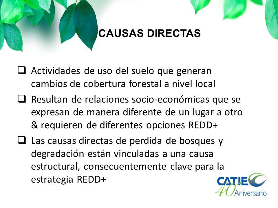 CAUSAS DIRECTAS Actividades de uso del suelo que generan cambios de cobertura forestal a nivel local Resultan de relaciones socio-económicas que se ex
