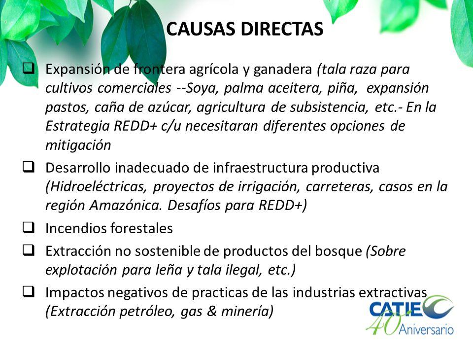 CAUSAS DIRECTAS Expansión de frontera agrícola y ganadera (tala raza para cultivos comerciales --Soya, palma aceitera, piña, expansión pastos, caña de azúcar, agricultura de subsistencia, etc.- En la Estrategia REDD+ c/u necesitaran diferentes opciones de mitigación Desarrollo inadecuado de infraestructura productiva (Hidroeléctricas, proyectos de irrigación, carreteras, casos en la región Amazónica.