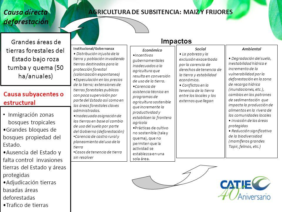 Impactos Institucional/Gobernanza Distribución injusta de la tierra y población invadiendo tierras destinadas para la protección forestal (colonizació