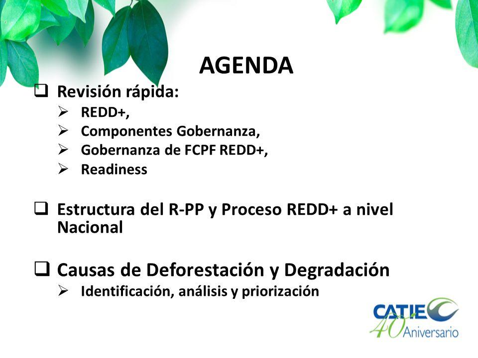 AGENDA Revisión rápida: REDD+, Componentes Gobernanza, Gobernanza de FCPF REDD+, Readiness Estructura del R-PP y Proceso REDD+ a nivel Nacional Causas de Deforestación y Degradación Identificación, análisis y priorización