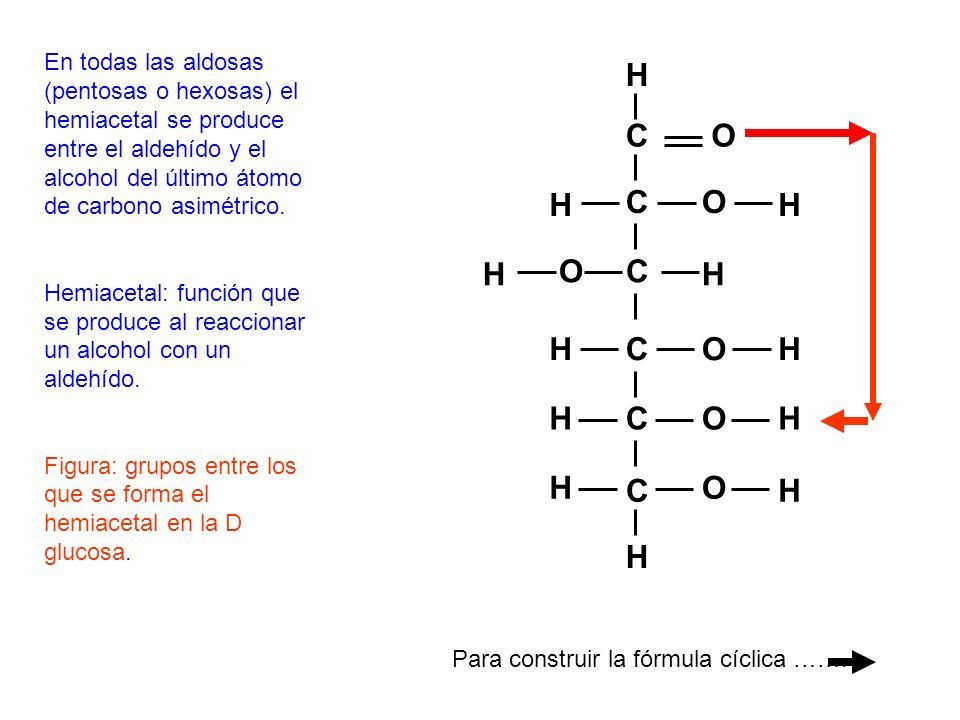 En todas las aldosas (pentosas o hexosas) el hemiacetal se produce entre el aldehído y el alcohol del último átomo de carbono asimétrico. Hemiacetal:
