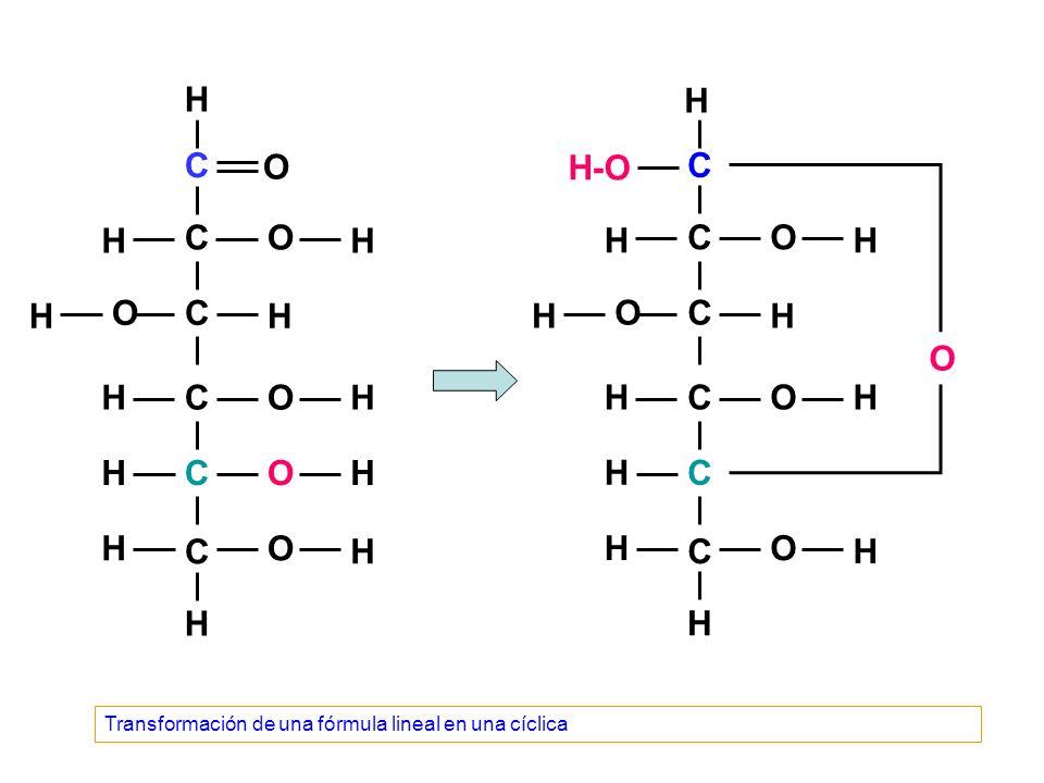 C C C C C C O O O O O O H H H H H H H H H H H H C C C C C C O O O O O H H-O H H H H H H H H H H Transformación de una fórmula lineal en una cíclica