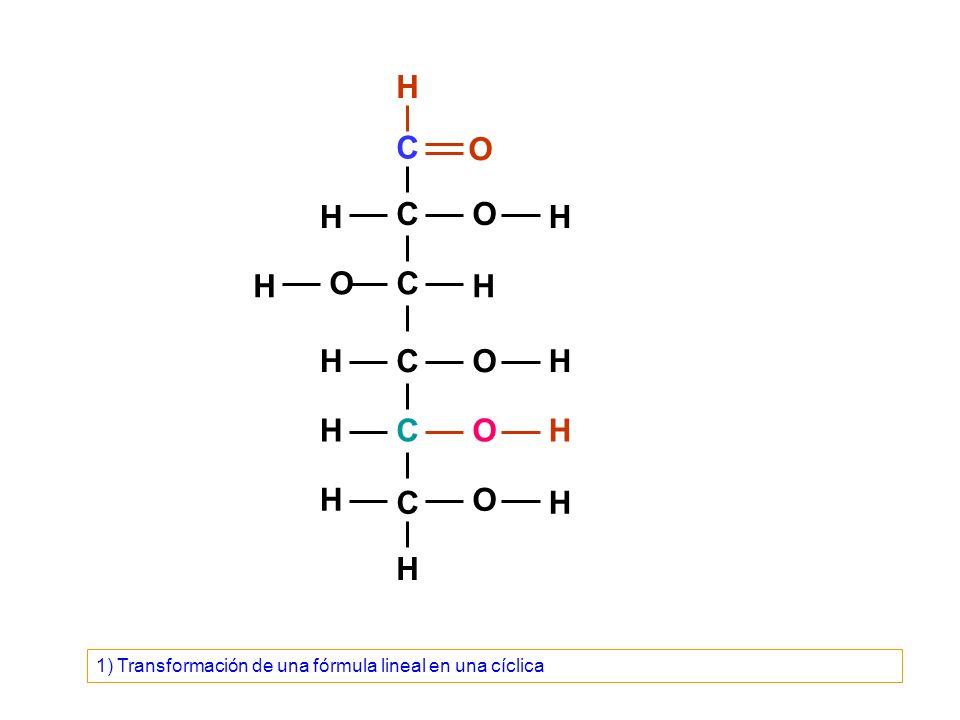 C C C C C C O O O O O H H H H OH H H H H H H H 1) Transformación de una fórmula lineal en una cíclica