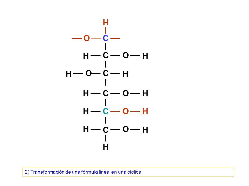 C C C C C C O O O O O H H H H OH H H H H H H H 2) Transformación de una fórmula lineal en una cíclica