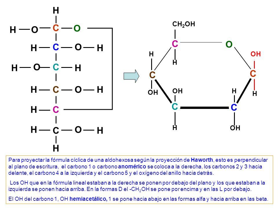 C C C C C C O O O O H H H H OH H H H H H H O OH H CH 2 OH H C C C OH H C Para proyectar la fórmula cíclica de una cetohexosa según la proyección de Haworth, esto es perpendicular al plano de escritura, el carbono 2, carbono anomérico, se coloca a la derecha, los carbonos 3 y 4 hacia delante, el carbono 4 a la izquierda y el oxígeno del anillo hacia detrás.