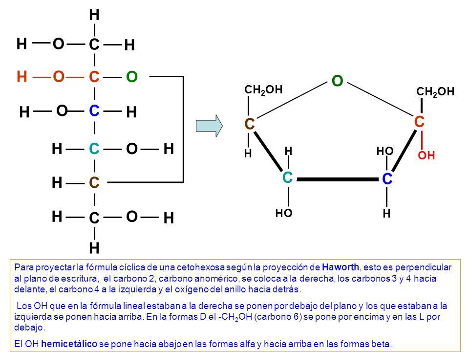 C C C C C C O O O O H H H H OH H H H H H H O OH H CH 2 OH H C C C OH H C Para proyectar la fórmula cíclica de una cetohexosa según la proyección de Ha
