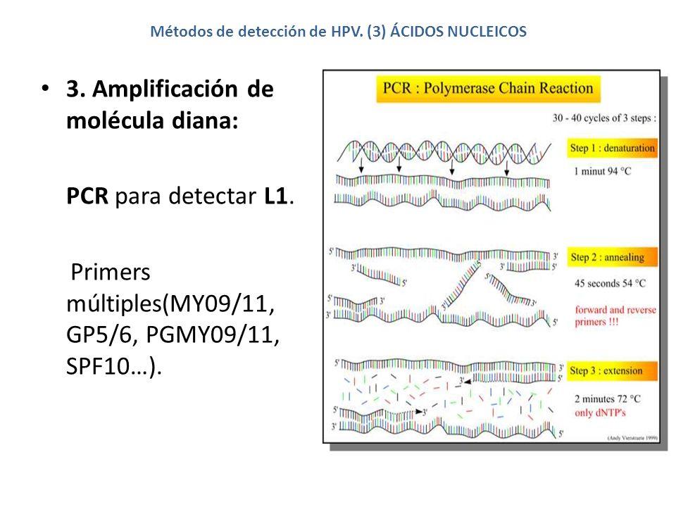 Métodos de detección de HPV. (3) ÁCIDOS NUCLEICOS 3. Amplificación de molécula diana: PCR para detectar L1. Primers múltiples(MY09/11, GP5/6, PGMY09/1