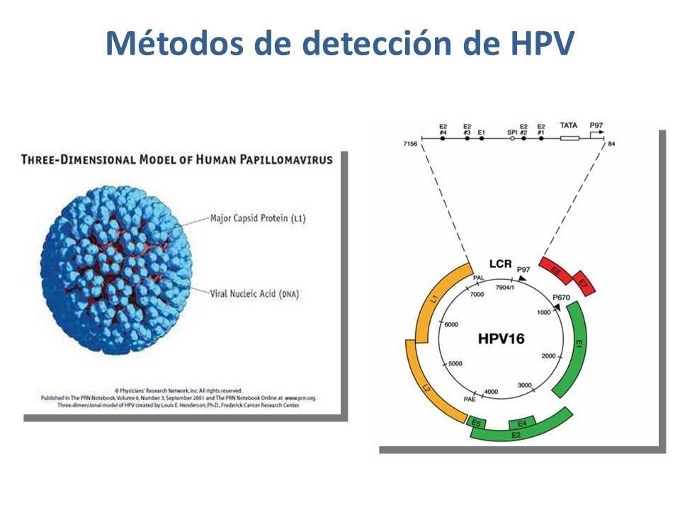 Métodos de detección de HPV.(3) ÁCIDOS NUCLEICOS 2.