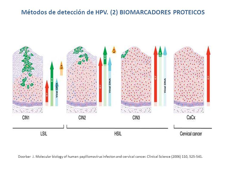 Métodos de detección de HPV.(3) ÁCIDOS NUCLEICOS CAPTURA DE HÍBRIDOS Sensibilidad clínica 85-100%.