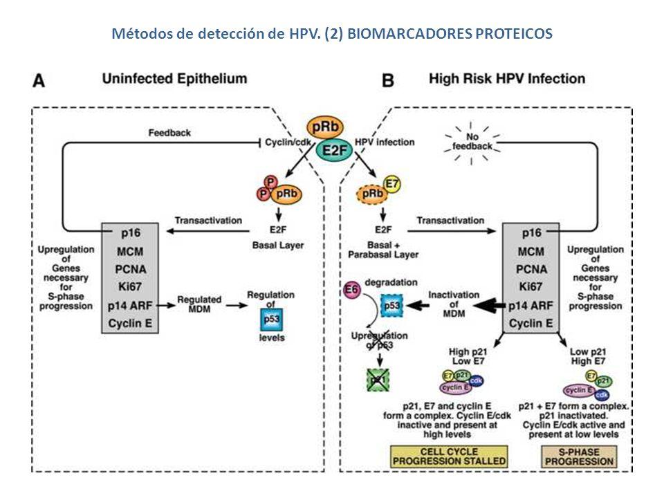 Métodos de detección de HPV.(3) ÁCIDOS NUCLEICOS CAPTURA DE HÍBRIDOS NO especifica tipo de HPV.