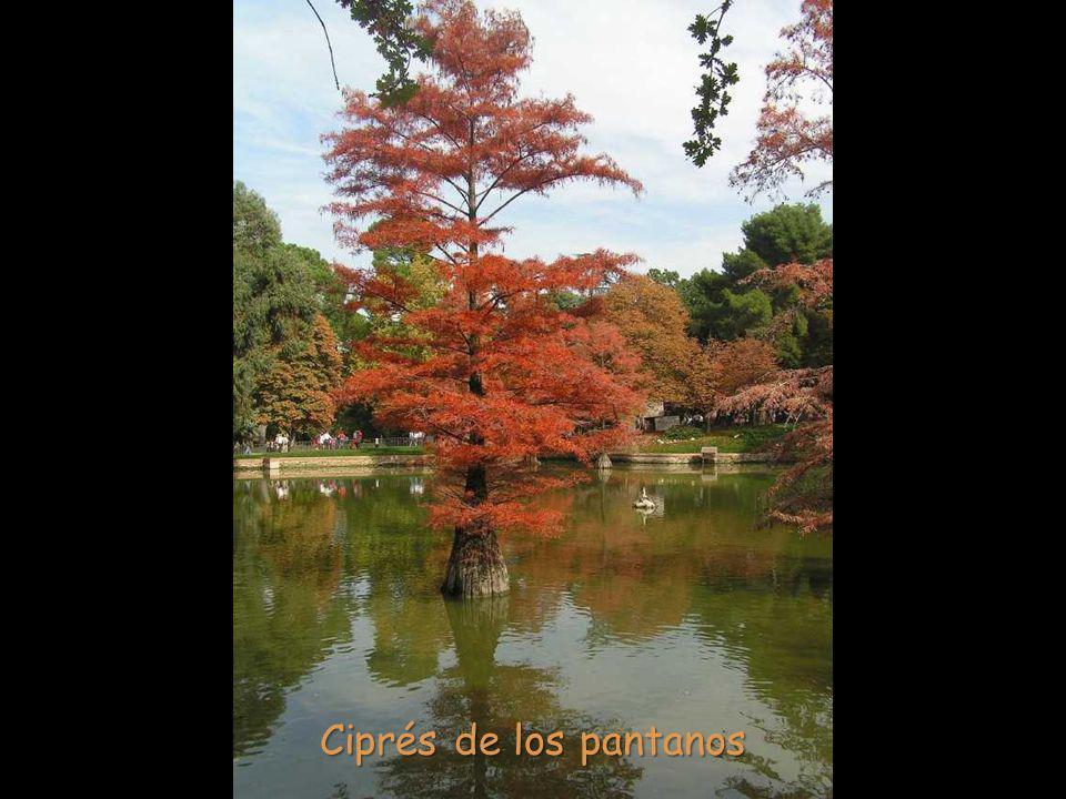 A sus pies se encuentra un lago artificial (existe una escalera que se sumerge dentro de él), en el que se pueden encontrar varios ejemplares de cipré