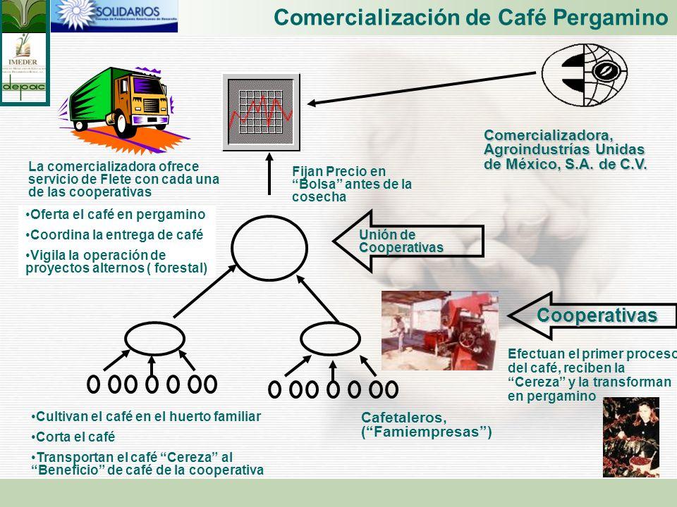 Comercialización de Café Pergamino Cafetaleros, (Famiempresas) Cooperativas Unión de Cooperativas Cultivan el café en el huerto familiar Corta el café