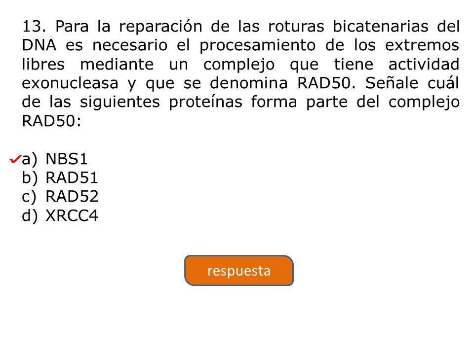 13. Para la reparación de las roturas bicatenarias del DNA es necesario el procesamiento de los extremos libres mediante un complejo que tiene activid