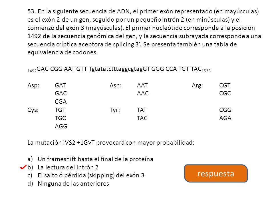 53. En la siguiente secuencia de ADN, el primer exón representado (en mayúsculas) es el exón 2 de un gen, seguido por un pequeño intrón 2 (en minúscul