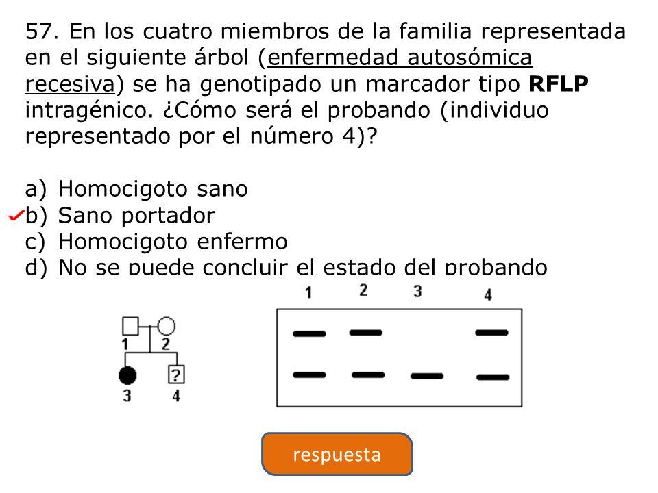 57. En los cuatro miembros de la familia representada en el siguiente árbol (enfermedad autosómica recesiva) se ha genotipado un marcador tipo RFLP in
