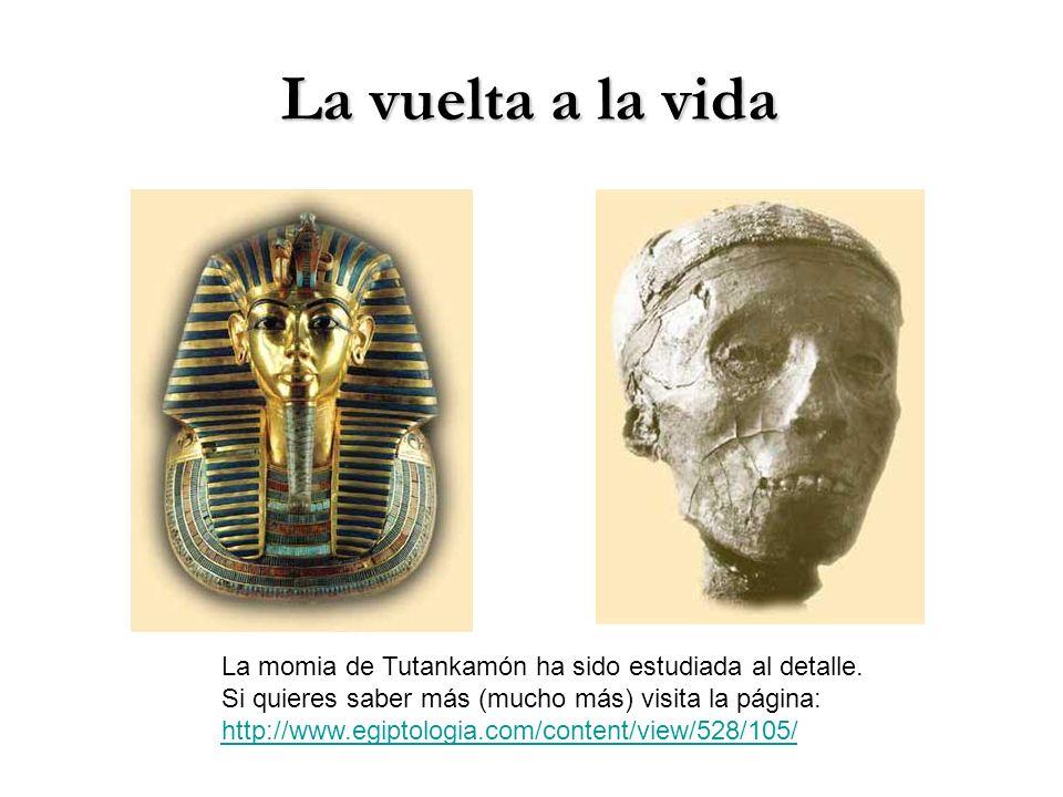 La vuelta a la vida La momia de Tutankamón ha sido estudiada al detalle. Si quieres saber más (mucho más) visita la página: http://www.egiptologia.com