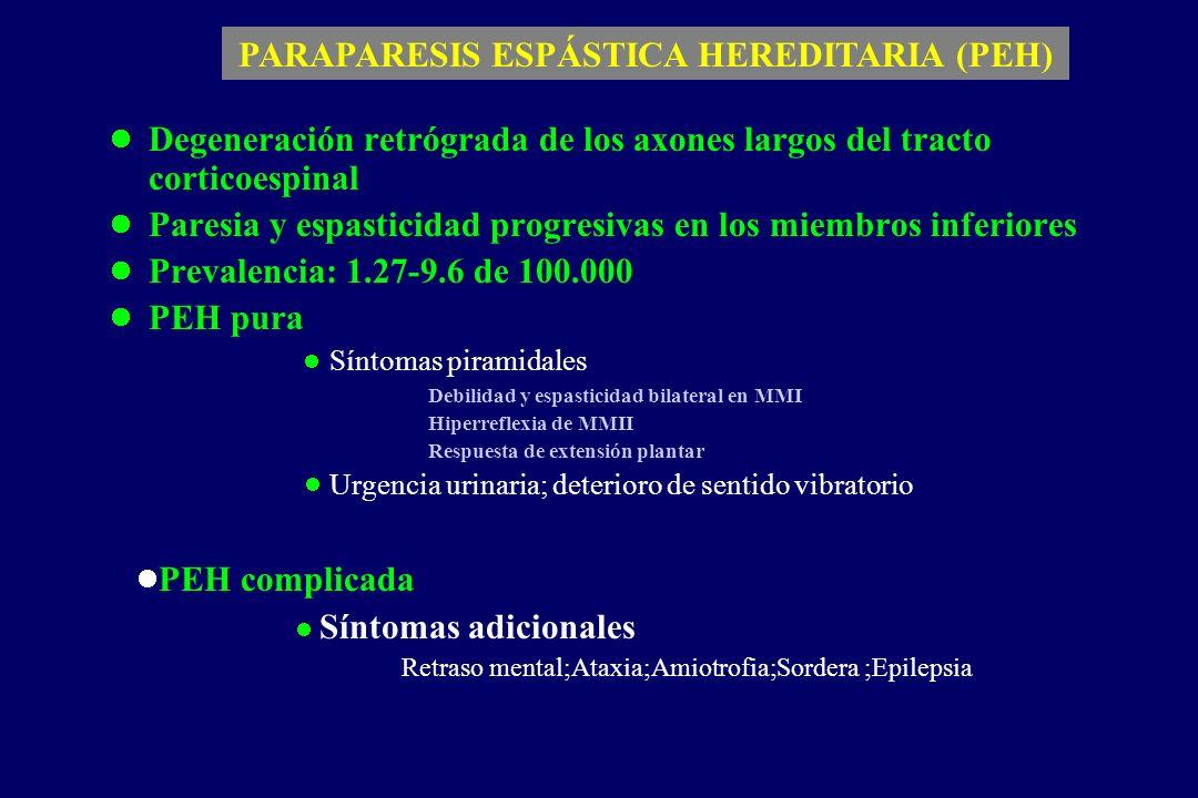 Degeneración retrógrada de los axones largos del tracto corticoespinal Paresia y espasticidad progresivas en los miembros inferiores Prevalencia: 1.27-9.6 de 100.000 PEH pura Síntomas piramidales Debilidad y espasticidad bilateral en MMI Hiperreflexia de MMII Respuesta de extensión plantar Urgencia urinaria; deterioro de sentido vibratorio PARAPARESIS ESPÁSTICA HEREDITARIA (PEH) PEH complicada Síntomas adicionales Retraso mental;Ataxia;Amiotrofia;Sordera ;Epilepsia