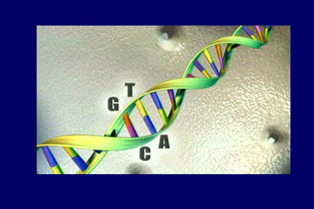 A Mutación Gln347His en el exon 7 del gen SPG4