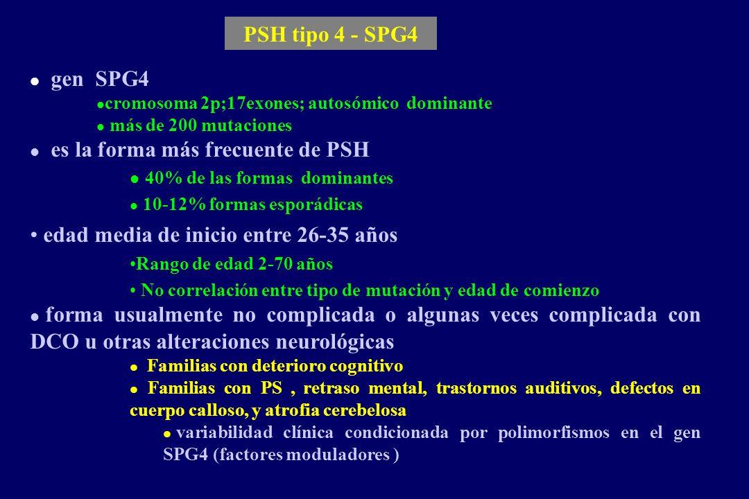 PSH tipo 4 - SPG4 l gen SPG4 l cromosoma 2p;17exones; autosómico dominante l más de 200 mutaciones l es la forma más frecuente de PSH l 40% de las formas dominantes l 10-12% formas esporádicas edad media de inicio entre 26-35 años Rango de edad 2-70 años No correlación entre tipo de mutación y edad de comienzo l forma usualmente no complicada o algunas veces complicada con DCO u otras alteraciones neurológicas l Familias con deterioro cognitivo l Familias con PS, retraso mental, trastornos auditivos, defectos en cuerpo calloso, y atrofia cerebelosa l variabilidad clínica condicionada por polimorfismos en el gen SPG4 (factores moduladores ) l