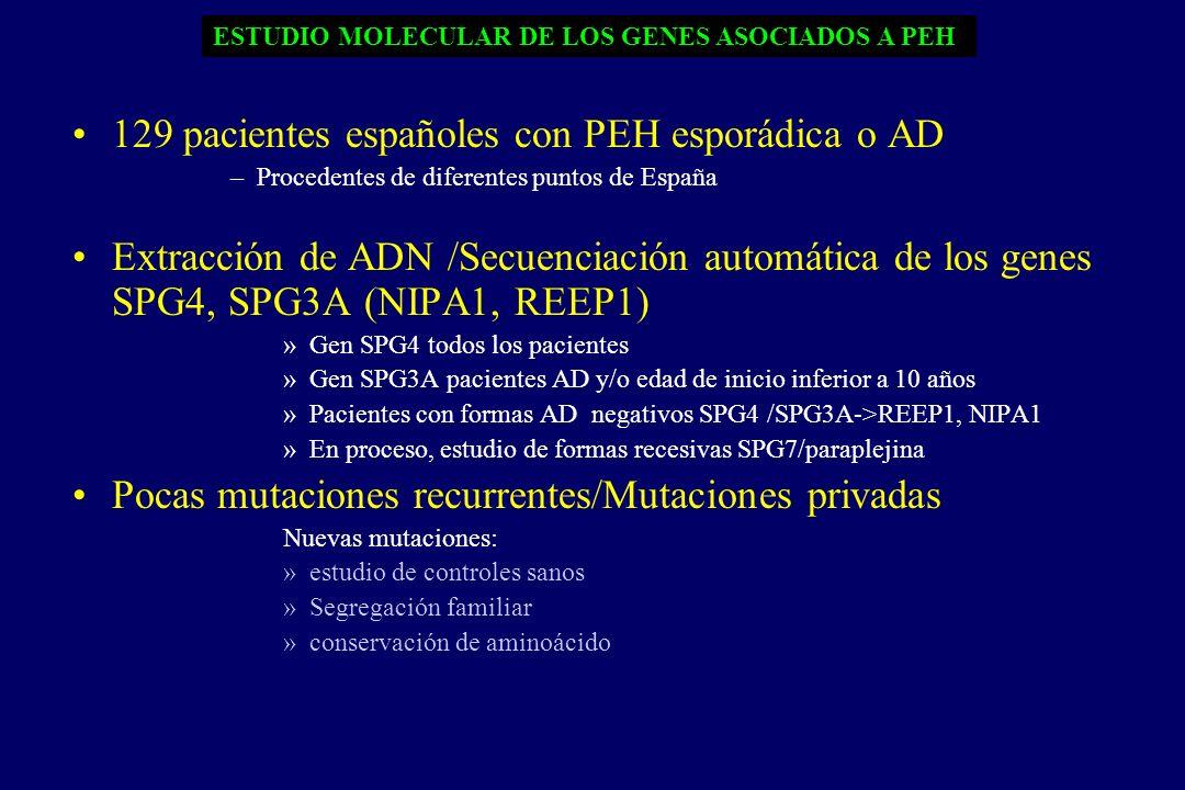 129 pacientes españoles con PEH esporádica o AD –Procedentes de diferentes puntos de España Extracción de ADN /Secuenciación automática de los genes SPG4, SPG3A (NIPA1, REEP1) »Gen SPG4 todos los pacientes »Gen SPG3A pacientes AD y/o edad de inicio inferior a 10 años »Pacientes con formas AD negativos SPG4 /SPG3A->REEP1, NIPA1 »En proceso, estudio de formas recesivas SPG7/paraplejina Pocas mutaciones recurrentes/Mutaciones privadas Nuevas mutaciones: »estudio de controles sanos »Segregación familiar »conservación de aminoácido ESTUDIO MOLECULAR DE LOS GENES ASOCIADOS A PEH