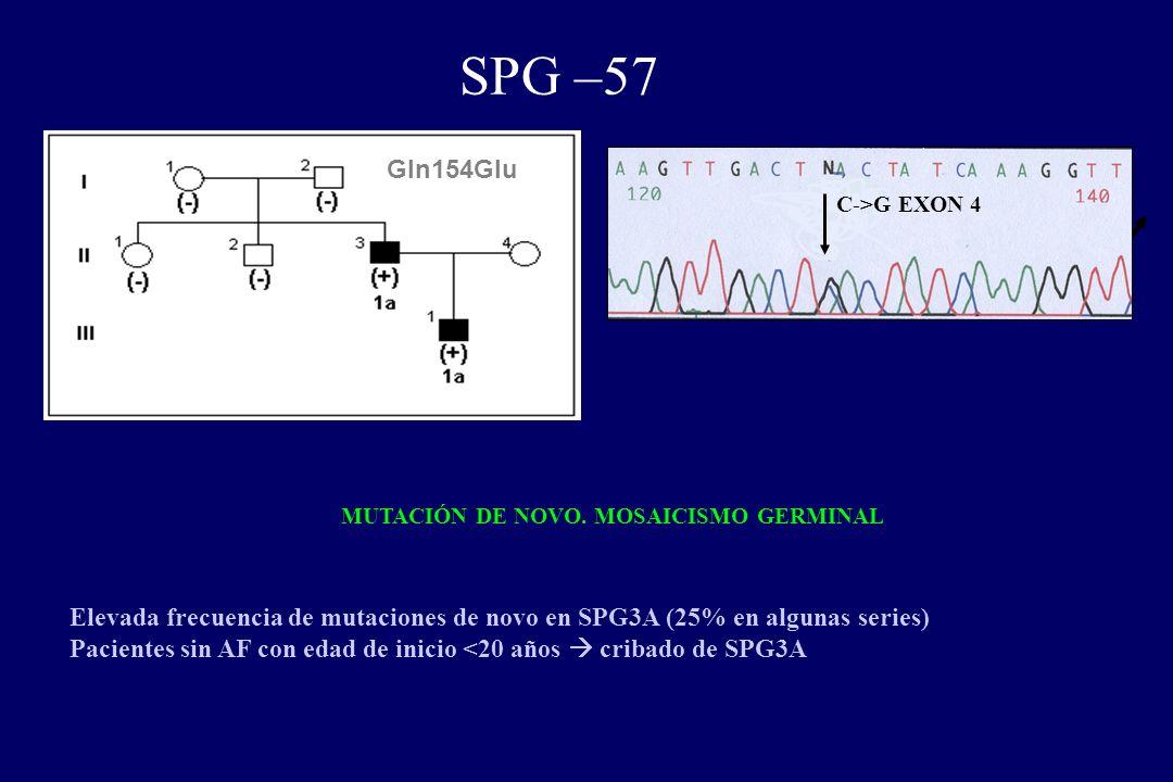 SPG –57 Gln154Glu C->G EXON 4 MUTACIÓN DE NOVO.