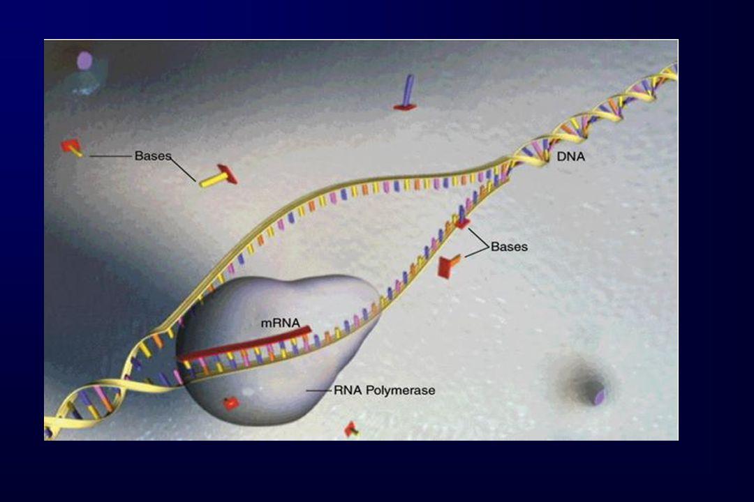 MUTACIONES EN SPG3A 3 Gln154GluArg239CysVal253IleHis256Asn N-t C-t GTPasa TMTM 1 2 3 4 5 67 8 9 10 11 12 1314 Asn440Thr A) B) 3 N-t C-t GTPasa TM TM 14 A) B) 6 casos índice portadores de mutación en el gen SPG3A E.I.