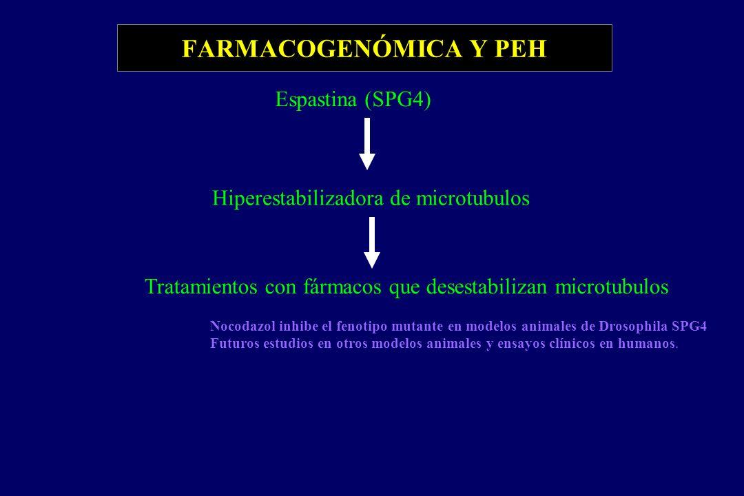 FARMACOGENÓMICA Y PEH Espastina (SPG4) Hiperestabilizadora de microtubulos Tratamientos con fármacos que desestabilizan microtubulos Nocodazol inhibe el fenotipo mutante en modelos animales de Drosophila SPG4 Futuros estudios en otros modelos animales y ensayos clínicos en humanos.