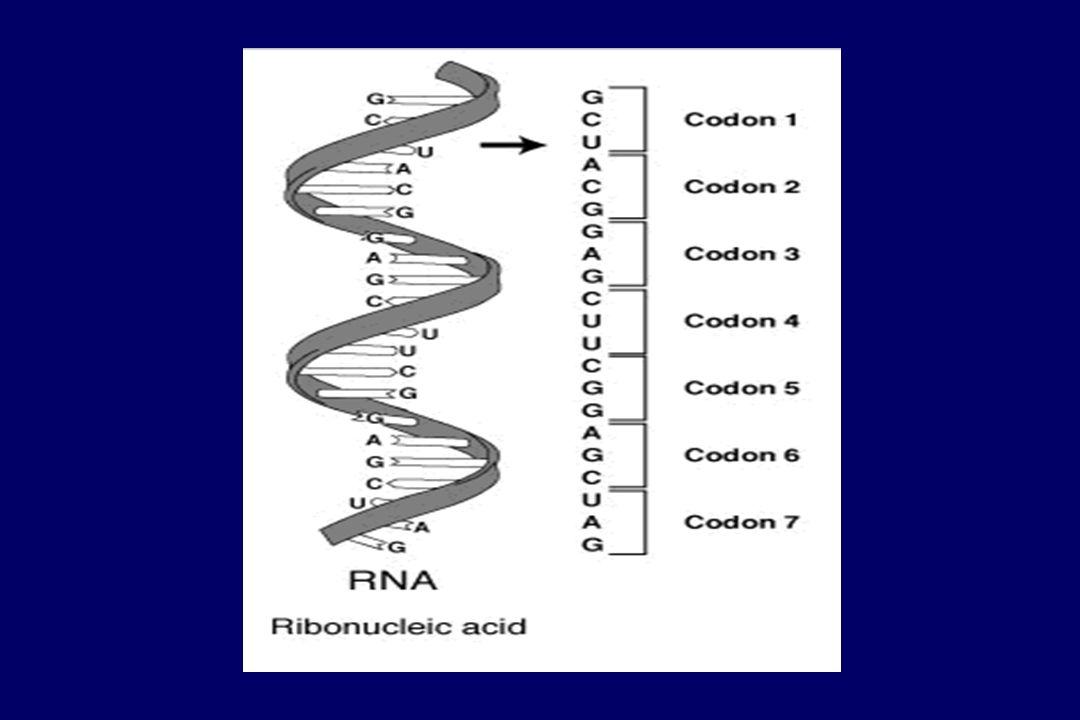 Células fetales ADN Amplificación mediante PCR Presencia mutaciónAusencia de mutación Análisis genético-molecular