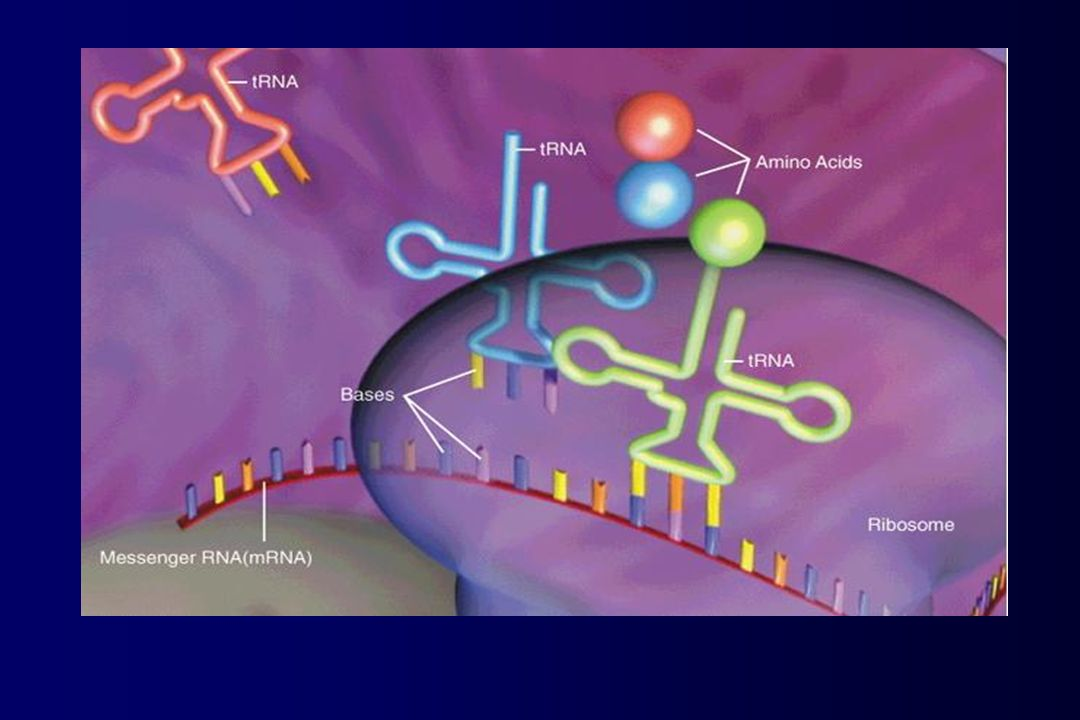 SPG3A/ATLASTINA 10% de las formas dominantes formas puras con edades de inicio tempranas (edad media de inicio <10 años ), y progresión lenta gen con 14 exones y se expresa fundamentalmente en SNC 30 mutaciones en dominios funcionales pérdida o ganancia de función proteína atlastina (558 aminoácidos) pertenece a la familia de las guanidin trifosfatasas (GTPases) 2 dominios transmembrana/GTPasas implicadas en tráfico intracelular Expresión ubicua pero mayor en regiones del cerebro que controlan el movimiento voluntario Atlastina mutada RE-AG afectado desarrollo o función axonal inadecuados