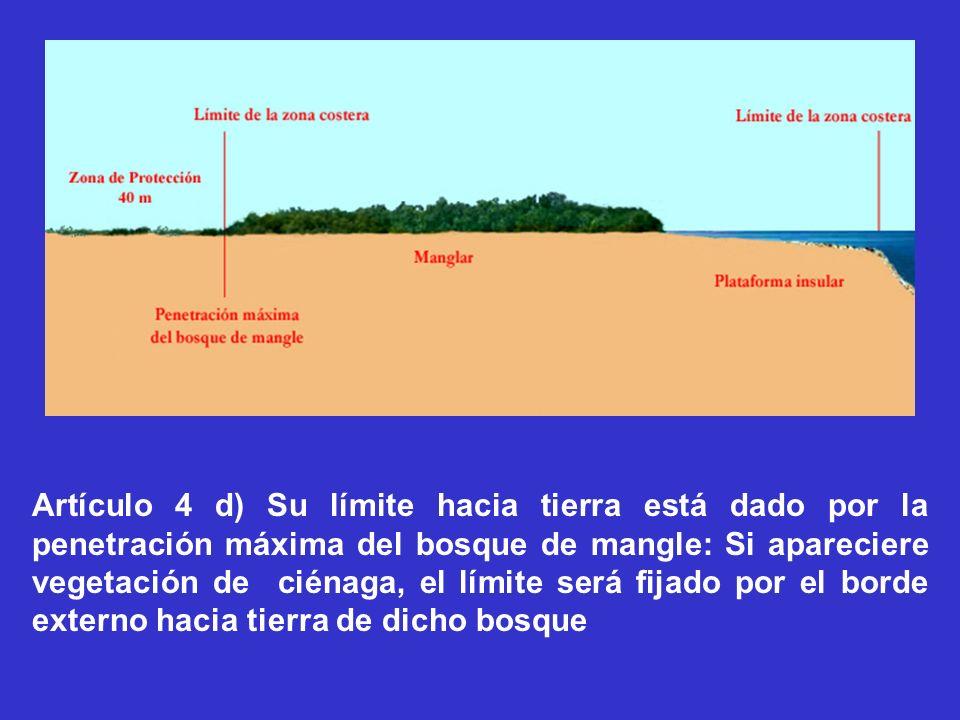 Artículo 4 d) Su límite hacia tierra está dado por la penetración máxima del bosque de mangle: Si apareciere vegetación de ciénaga, el límite será fij