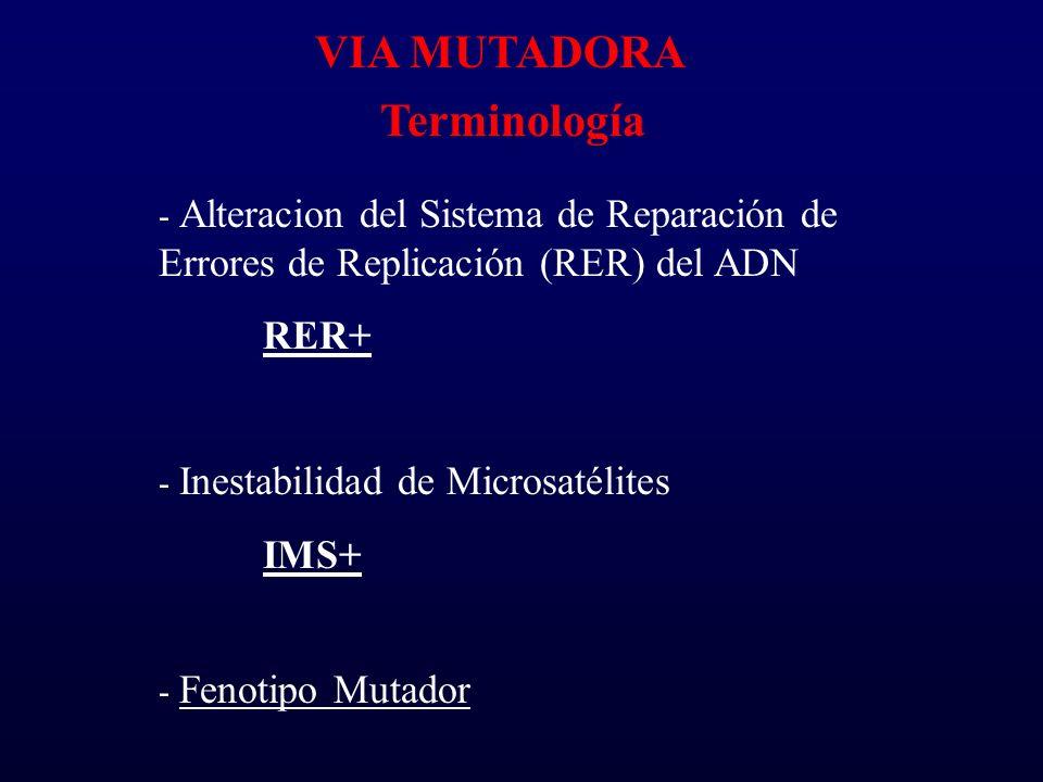 VIA MUTADORA Terminología - Alteracion del Sistema de Reparación de Errores de Replicación (RER) del ADN RER+ - Inestabilidad de Microsatélites IMS+ -
