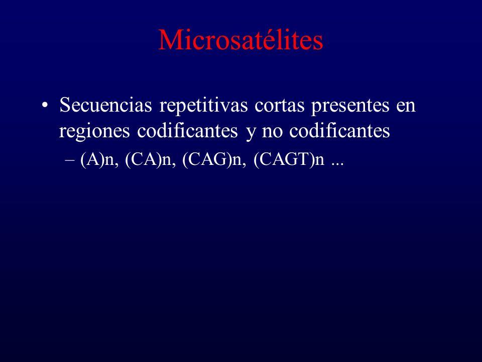 Microsatélites Secuencias repetitivas cortas presentes en regiones codificantes y no codificantes –(A)n, (CA)n, (CAG)n, (CAGT)n...