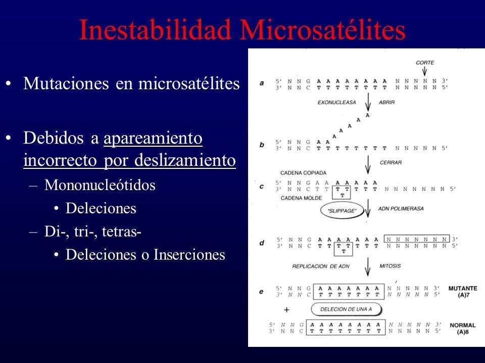 Inestabilidad Microsatélites Mutaciones en microsatélites Debidos a apareamiento incorrecto por deslizamiento –Mononucleótidos Deleciones –Di-, tri-,