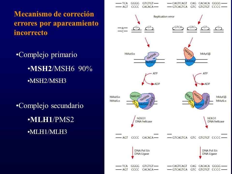 1.106 CCR 5.8% IMS+ –96% no expresión MLH1/MSH2 1.260 CCR 5.8% no expresión –58 MLH1 (78%) –16 MSH2 (22%) IMS INMUNOHISTOQUÍMICA