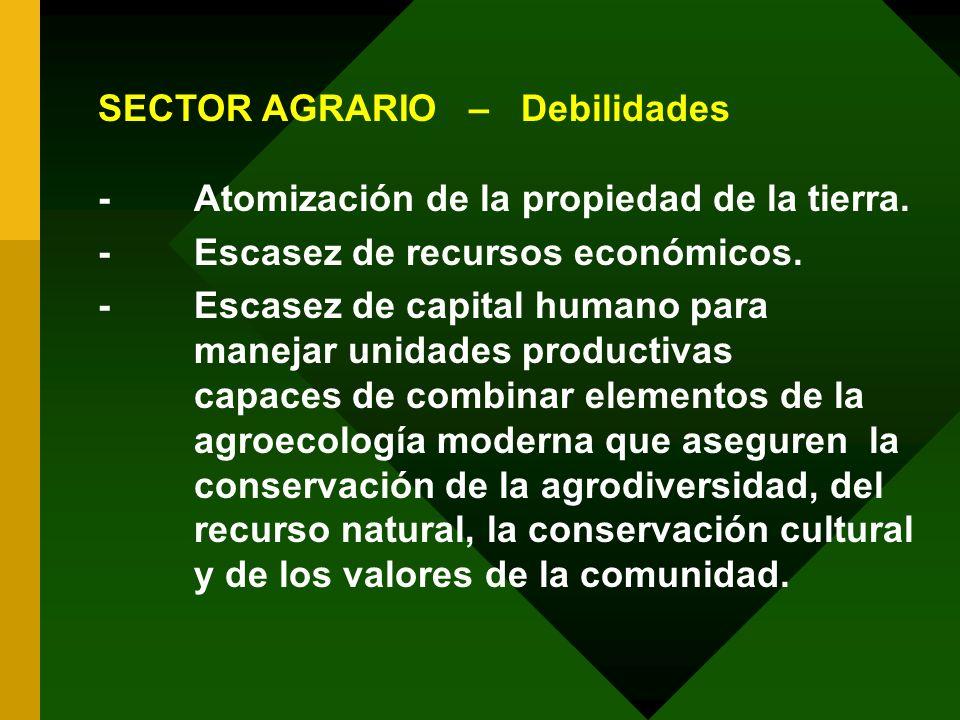 SECTOR AGRARIO – Debilidades -Atomización de la propiedad de la tierra. -Escasez de recursos económicos. -Escasez de capital humano para manejar unida
