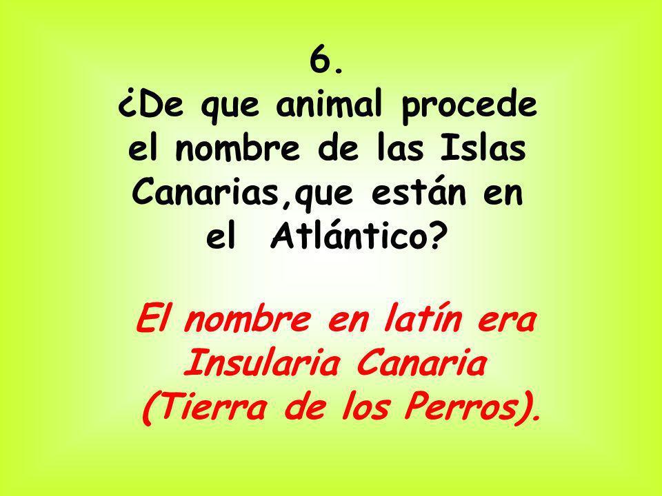 6. ¿De que animal procede el nombre de las Islas Canarias,que están en el Atlántico? El nombre en latín era Insularia Canaria (Tierra de los Perros).
