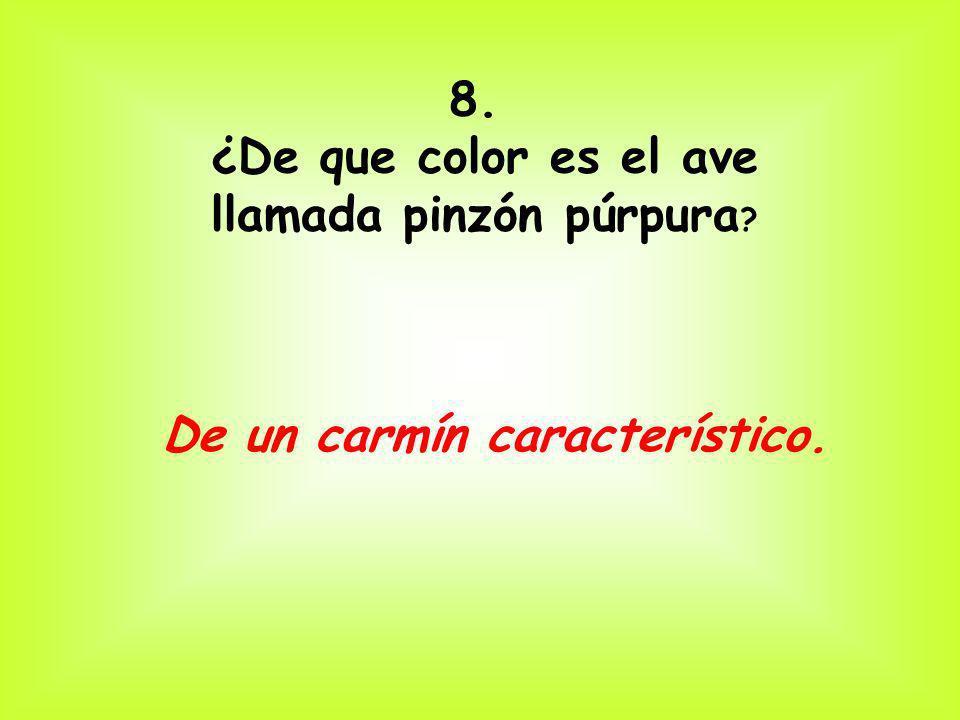 8. ¿De que color es el ave llamada pinzón púrpura ? De un carmín característico.