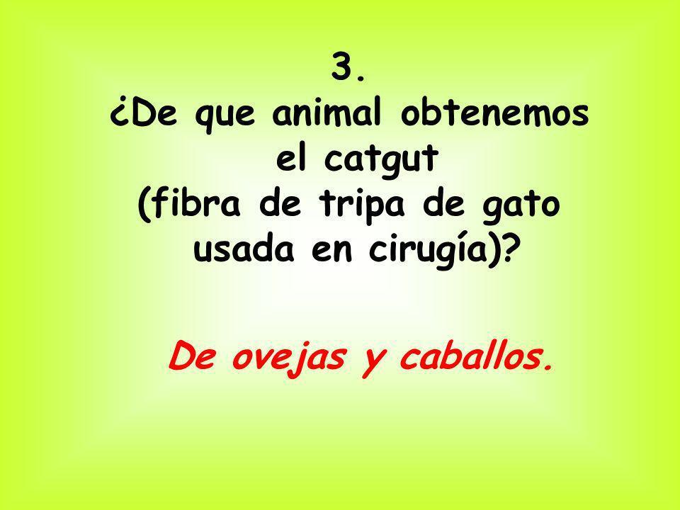3. ¿De que animal obtenemos el catgut (fibra de tripa de gato usada en cirugía)? De ovejas y caballos.